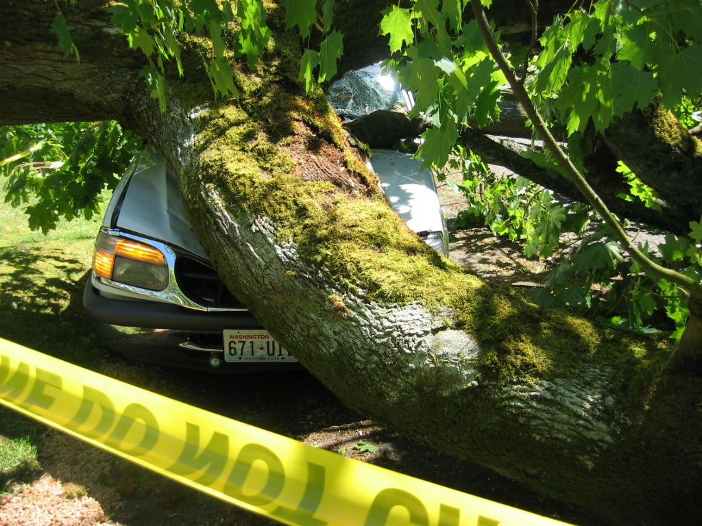 tree meets car